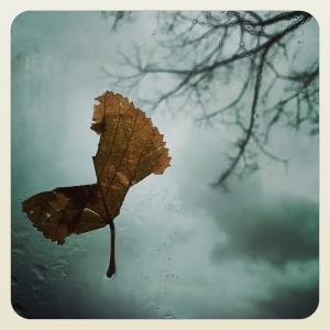 Si sta come d'autunno_2